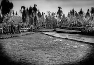 A rice crop lost: Volcanic ash from Mt. Merapi's worst eruption in over a century has buried and ruined this field's rice crop, a financial loss for a farming family.  Along the highway from Yogyakarta to Magalang, Indonesia.