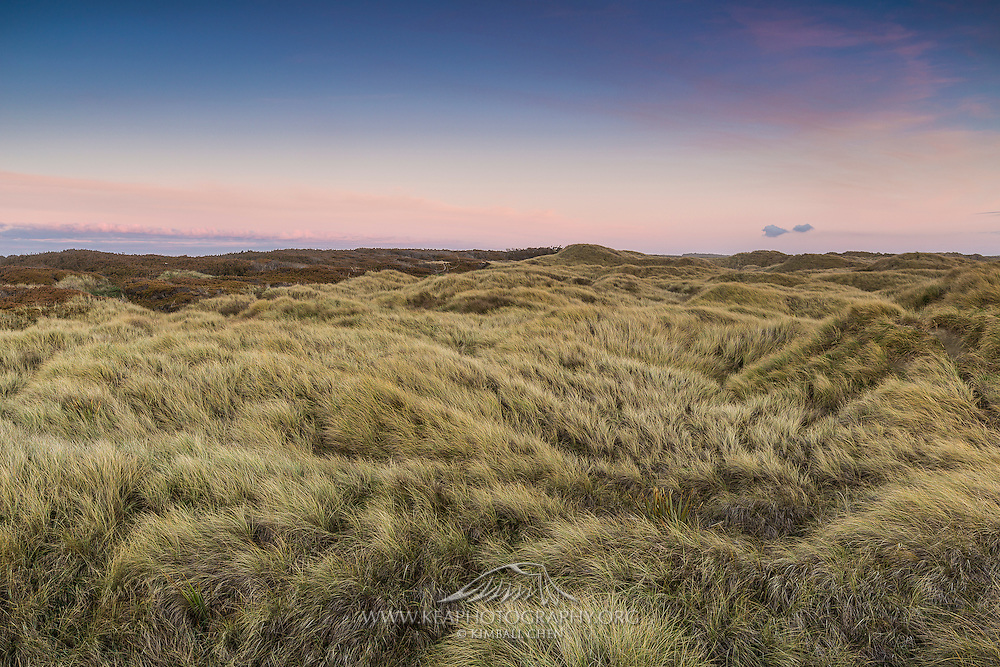 Sunset over the rolling tussock fields in the sand dunes of Oreti Beach, Invercargill
