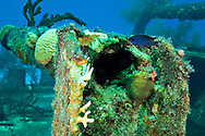Blue Chromis and Aft Rails,  Doc Paulson, Grand Cayman