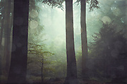 Foggy forest on a summer morning - texturized photograph.