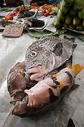 Coral Reef Species for sale<br /> Suva Sea Food Market<br /> Suva<br /> Viti Levu<br /> Fiji. <br /> South Pacific