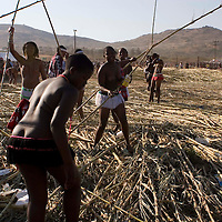 Girls selct the reeds they will parade with at the Zulu royal palace in Nongoma, KwaZulu Natal, South Africa Sept 8, 2007. Thousands of virgin girls attend the annual Reed Dance at the Enyokeni palace from which the Zulu King Zwelethini may choose a bride. Photo Greg Marinovich / Bloomberg News