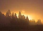 A foggy sunrise in the Carson National Forest of northern New Mexico.