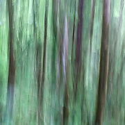 OR02332-00...OREGON - Abstract view of a forest in Ecola State Park.