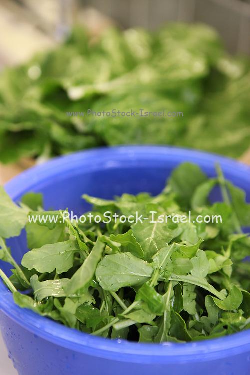 fresh Roquette leaves