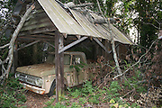 A Classic Dodge Pickup Truck, parked under an old wooden car port with broken trees through the roof.