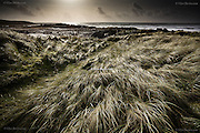 Wind blown Marram grass catches the last of the sunlight as the weather changes and a gale advances over the Irish Sea here at Porth Tyn Tywyn, Rhosneigr, Anglesey, Wales.
