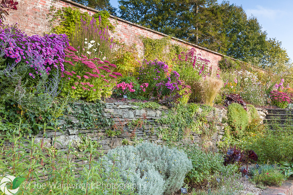 Colouful herbaceous borders in the Walled Garden at Holehird Gardens, Cumbria, photographed in October. Planting includes Lythrum, Penstemons, Sedums and Asters