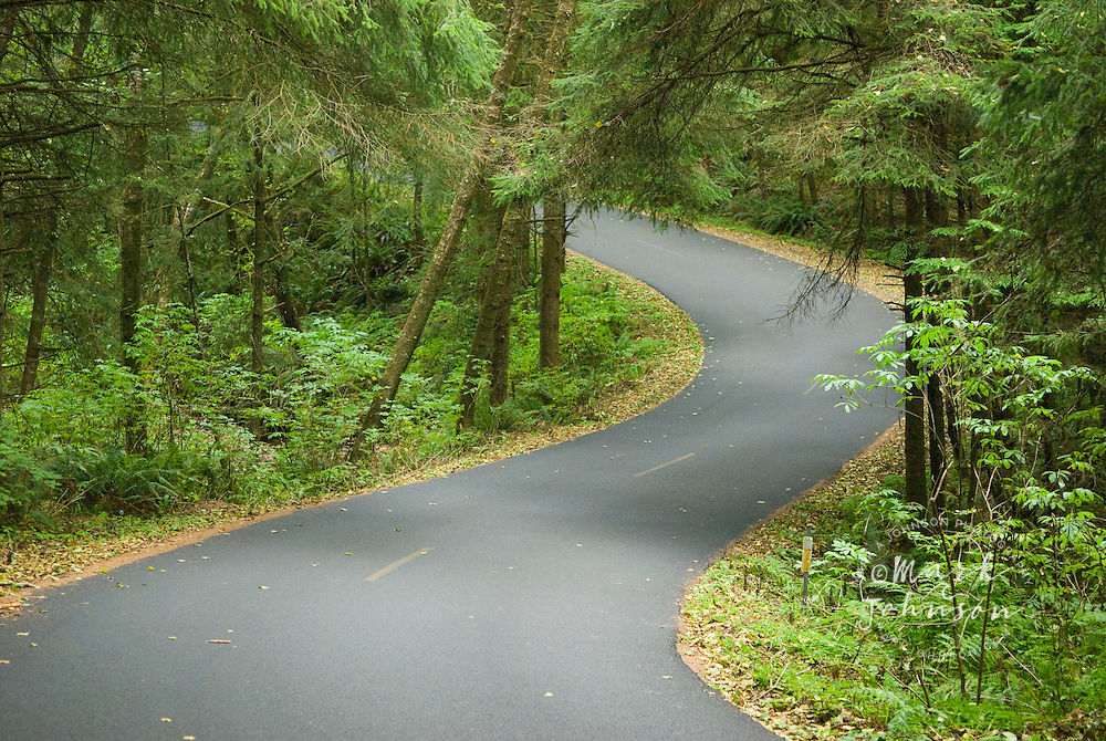 Curvy road in forest, Oregon