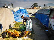 04 MARCH 2017 - KATHMANDU, NEPAL: A woman feeds her chickens in an IDP camp in the center of Kathmandu. The camp opened days after the April 2015 earthquake devastated Nepal, killing almost 9,000 people. At its peak, about 1,800 families lived in the camp. The camp is still open nearly two years after the earthquake, about 400 families currently live in the camp. Camp residents say the Kathmandu municipal government is trying to close the camp and is encouraging residents to find new housing. They said the government is cutting off services to the camp and last week stopped the free distribution of water, although water can be purchased for delivery. Most of the people in the camp came to Kathmandu from rural villages in the mountains in the weeks after the earthquake. Many of the residents of the camp, technically homeless, have found work in Kathmandu's bustling construction industry, rebuilding homes destroyed in the earthquake.       PHOTO BY JACK KURTZ