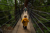 canopy walkway through temperate rain forest.