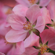 &quot;Baby Oh Baby&quot;<br />