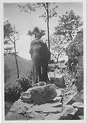 Scans from the  Elsa Sherwood (nee Scobie) collection.<br /> They were on Spring Valley and then Cullen (both near Badulla) between 1950 and 1963.