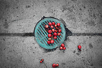 A seasoned verdigris sidewalk drain with red berries in the fall.