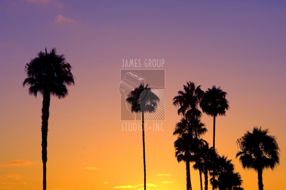 Palm tree silhouettes against a tropical sunset