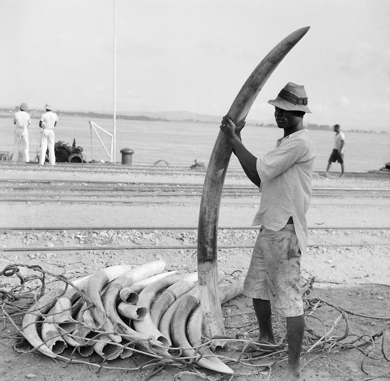 Elephant Tusks, Leopoldville (now Kinshasa), Belgian Congo (now Democratic Republic of the Congo), Africa, 1937