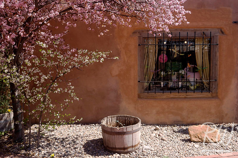 Spring Trees and Window at Old Town Plaza, Albuquerque, New Mexico