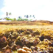 reef, nature,ocean,under water,photography