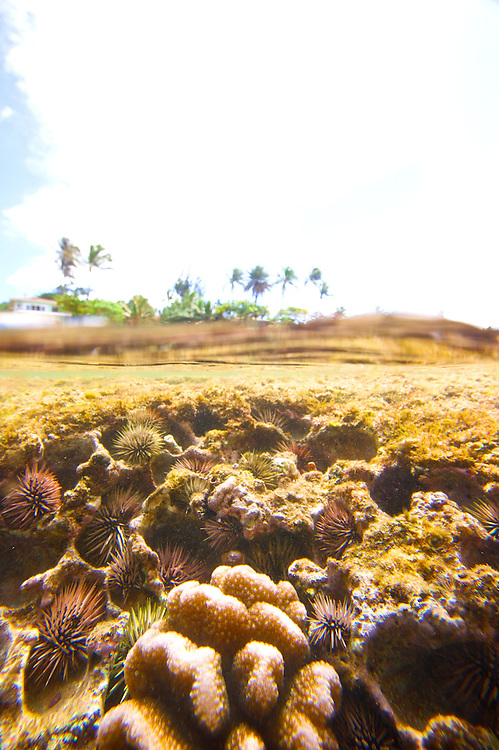 reef, nature,ocean,under water,photography