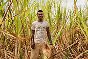 Dominican Republic. A tahitian young man, how don't speak spanish ( Dominican Republic official language) works in sugar cane field near la Romana.