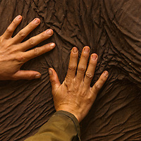 Hands of a Mahout on his elephant at an Elephant Sanctuary outside of Chang Mai, Thailand
