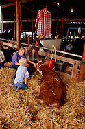 Teenage girls and young boy care for steer at County Fair Livestock Show, Hydro, Oklahoma