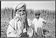 Muzzafargarh: 'Basti' people or 'Jhuggi Wallahs' wait for their family members to return from working as contract workers collecting sugar cane for processing at the local sugar mill. ..Contract workers typically exchange votes in return for employment  on the massive sugar cane plantations or are leased portions of land where they can cultivate their own crops for processing at the sugar mills...Contract workers typically earn PRS100 ($1.00) per day, working from first light until dusk, cutting and collecting sugar cane.   ..They will never earn enough money to be able to afford to buy their own land and thus are consigned to a life of poverty in the region. An acre of land will typically yield a return of PRS15,000 per annum for the land owner..