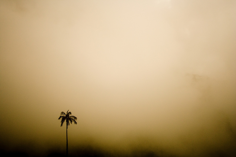 A wax palm silhouettes against cloud in the Valle del Cocora, Eje Cafetero Region of Colombia