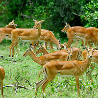 The shores of Lake Nakuru in Kenya are inhabitated by dozen of species, making it a paradise for wildlife photography.