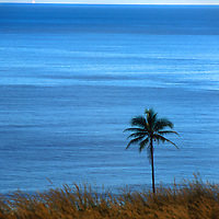 Lone palm tree on the coast of Gizo, Solomon Islands