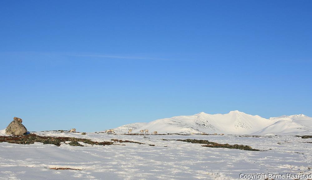 Sylene er vernet. Sylan landskapsvernområde og Sankkjølen naturreservat ble opprettet av Kongen i statsråd 11. april 2008. Området er til sammen 191 km2, og opphever den botaniske fredningen fra 1917, som var Norges første naturfredning.