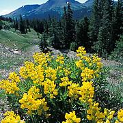 Rocky Mountain National Park, wildflowers, Colorado