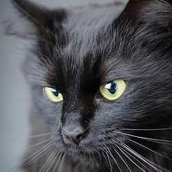 Faloola - Cat