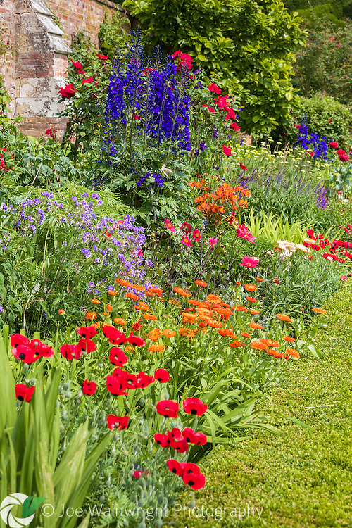 Vibrant coloured flowers, including poppies, helichrysum, delphiniums, salvias and roses, brighten this summer border on the Orangery Terrace at Powis Castle, Welshpool, Mid Wales.  Photographed in July.