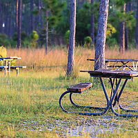 Picnic tables in a pine grove in Everglades National Park, Florida. WATERMARKS WILL NOT APPEAR ON PRINTS OR LICENSED IMAGES.