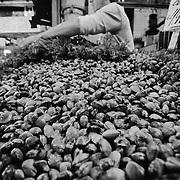 Shellfish mound at the fish market, Pike Place Market, Seattle, Washington