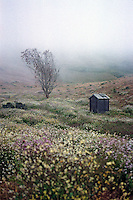 Lone tree and shed in field of wildflowers