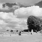 Neolithic Stones And Lone Tree - Avebury, UK - Infrared Black & White