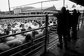 Norwich Livestock Market 2016 - Black & White