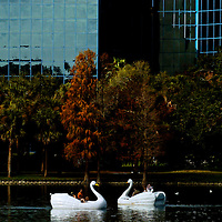 ORLANDO, FL -- January 30, 2008 -- Paddle boats shaped like a swans glide across Lake Eola near Thornton Park in Orlando, Fla.,  on Saturday, January 30, 2006.  The popular park was developed during the citrus industry boom in the 19th century and offers a tranquil haven set against the city's downtown to paddle around the floating fountain or jog the lake's perimeter.