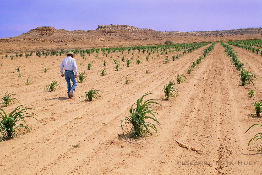 350149-1003D ~ Copyright: George H.H. Huey ~  Hopi Indian farmer, dry farming in his cornfield during summer drought.  Hopi Indian Reservation, Arizona.