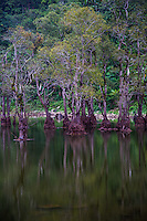 Lake Balinsasayao and its twin Lake Danao lie on the southern tip of Negros, Philippines.  Lake Balinsasayao is a protected Natural Park and is an protected ecosystem with enormous biodiversity.  The lakes were formed by craters one thousand feet above sea level and separated by a narrow mountain ridge. Twin Lakes is habitat for many birds, particularly hornbills.