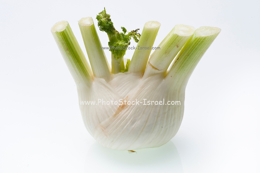 Fennel bulb, On white Background