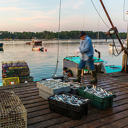 "Mark Havener (Captain of ""Who R U"") Loading bait onto his lobster bait at the Friendship Lobster Co-op in Friendship, Maine."
