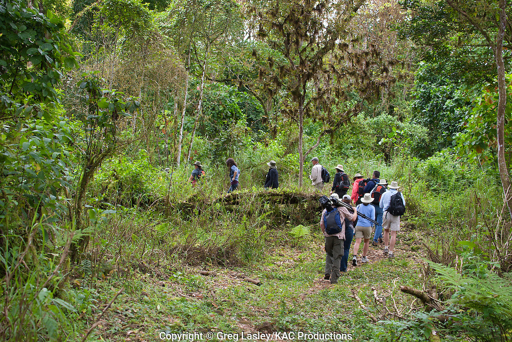Tourists walking in forest.highlands of.Santa Cruz Island,.Galapagos,.Ecuador.22 August 2010