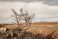10/11/2014 - Uyuni, Bolivia: Plastic tree #38. Plastic bags are part of the landscape of the Bolivian Altiplano. The accumulation of plastic bags on the environment cause deterioration of the landscapes and agriculture soils and it is associated to the death of domestic and wild animals.