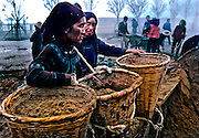 Hani women laboring in the early morning mist in Yuanyang, China