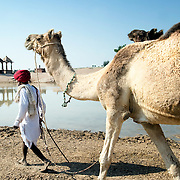 Rajasthani farmers taking their camels to a water pond (lake) to drink, Thar desert (India)