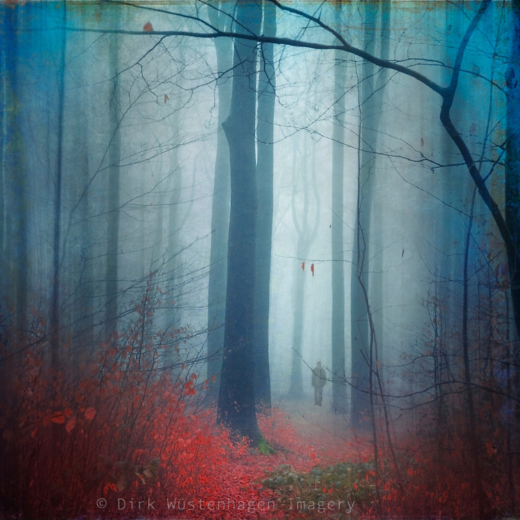 Moody forest scene on a wet and foggy winter day. Manipulated photograph edited with textures.