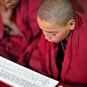 The child Monk reads the Buddhist scripture in Tibetan.